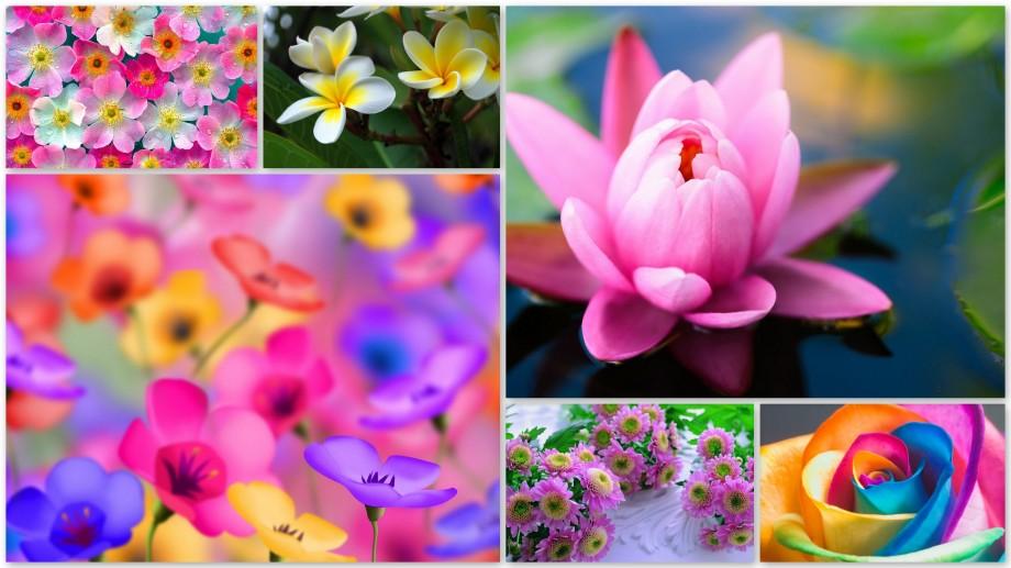 Flower / Happy Birthday