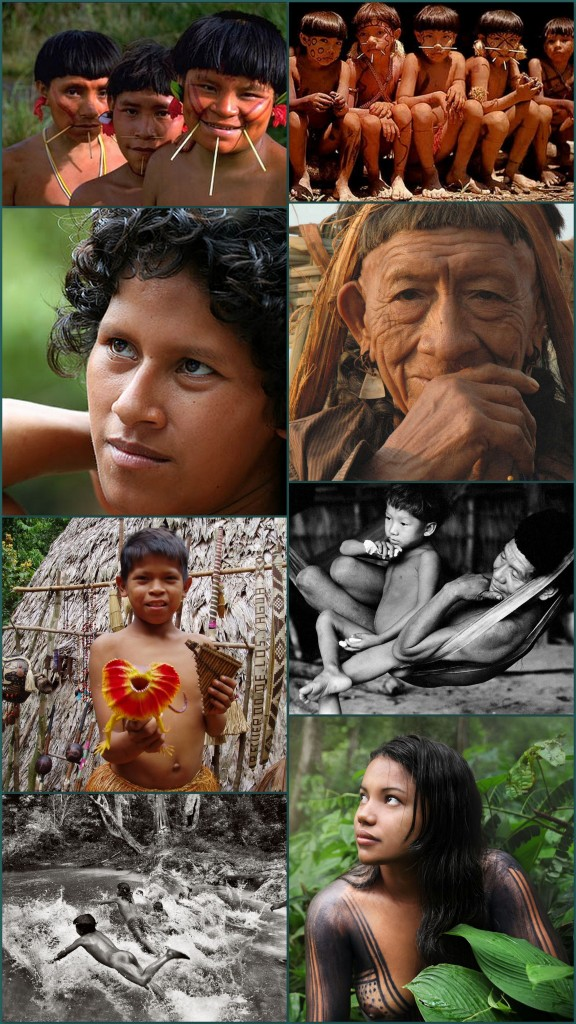 isolated Indians are known to travel extensively by foot during the dry season, appearing along the riverbanks as they search for turtle eggs buried in nests along the sandy beaches of the western Amazon. Mounting pressure from logging crews, wildcat gold prospectors, and seismic teams exploring for oil and gas are flushing these isolated indigenes out of the forests.